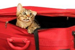 hacer maleta de viaje